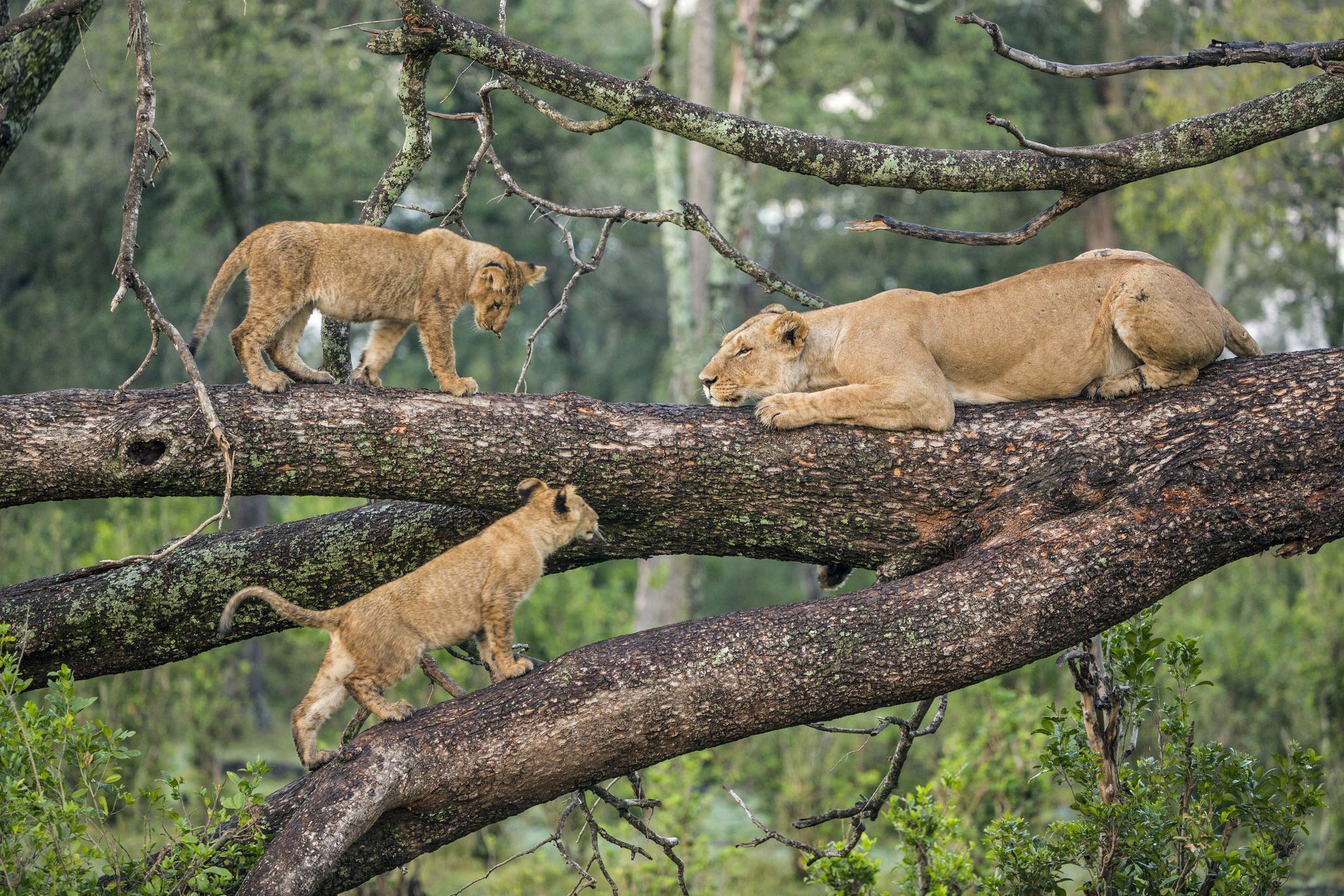 Special Safaris